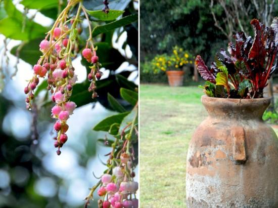 gardening-photography