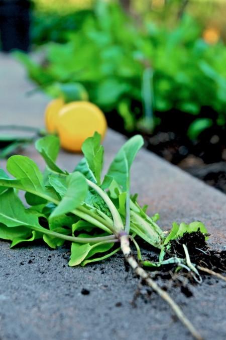 Meyer lemon vinaigrette recipe by WhiteOnRiceCouple.com