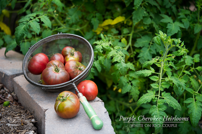 Baked tomatoes recipe on @whiteonrice