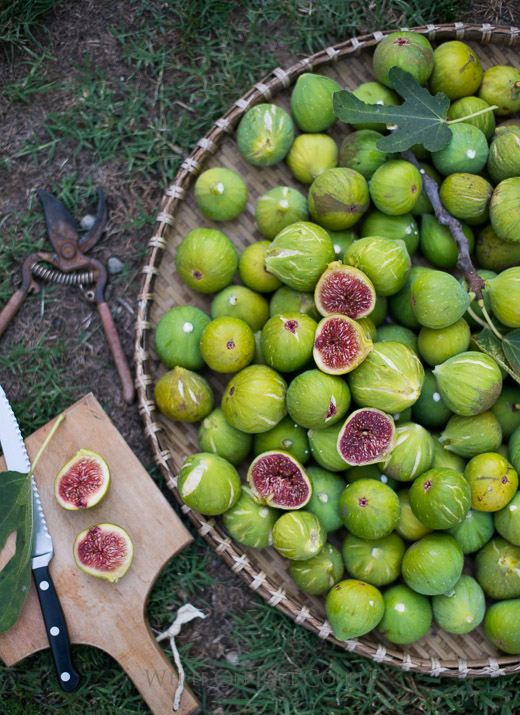 Fresh Figs for Baked Fig Recipe with Bacon & Blue Cheese on WhiteOnRiceCouple.com