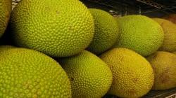 Fruit 007