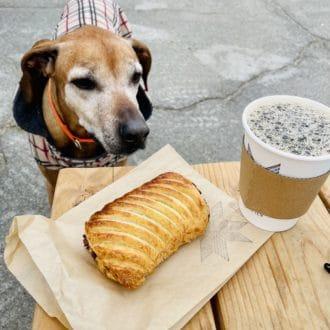 Lexi Dog Jacket for big dogs | WhiteOnRiceCouple.com