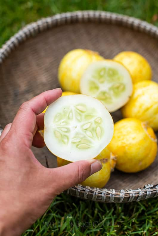What is a lemon cucumber? How to grow a lemon cucumber | @whiteonrice