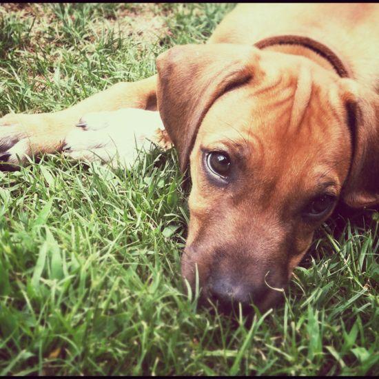 puppy lexi