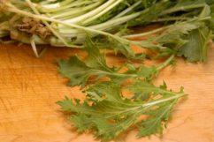 shrimp mizuna salad mustard plant
