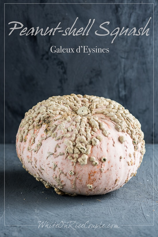 Winter Squash and Pumpkin Guide | Peanut Shell Squash Galeux D'Eysines @whiteonrice