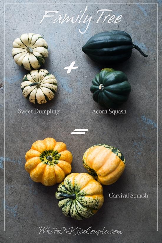 Winter Squash and Pumpkin Guide: Carnival Squash