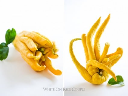 Buddhas Hand Citron for Cocktail Recipes, Dressings, Marinades and more Buddhas Hand Recipes   @whiteonrice