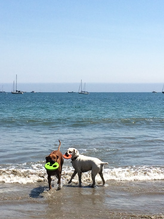 Where to take your dog on California Coast Road Trip that's dog friendly and leash free | @whiteonrice