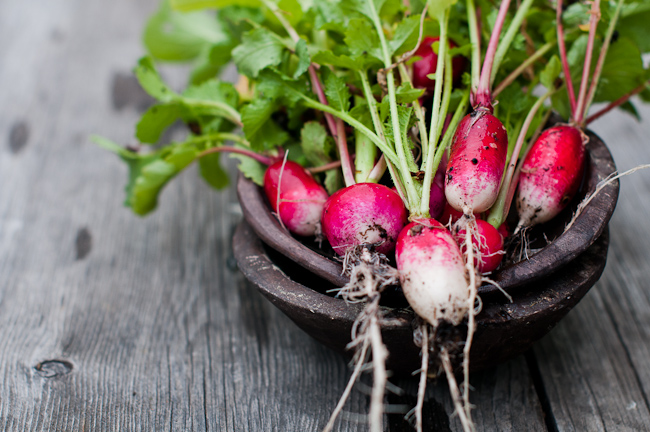 fresh garden radishes for chopped salad