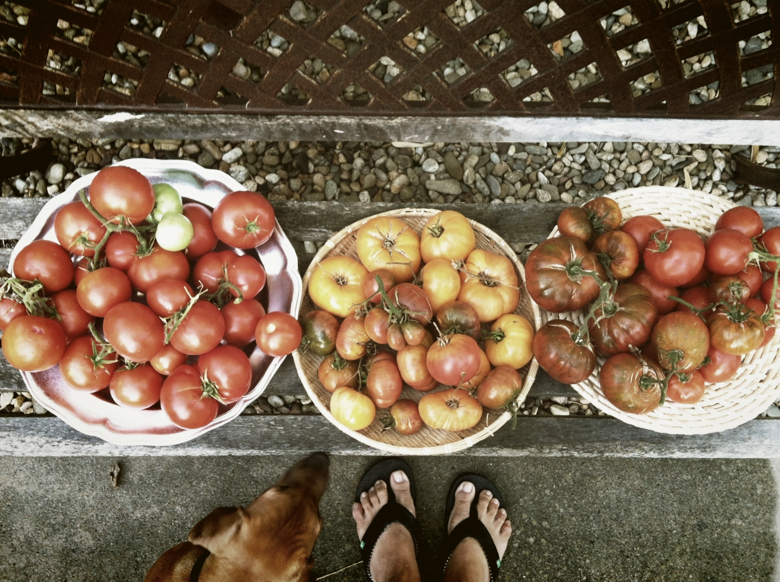 tomatoes with lexi