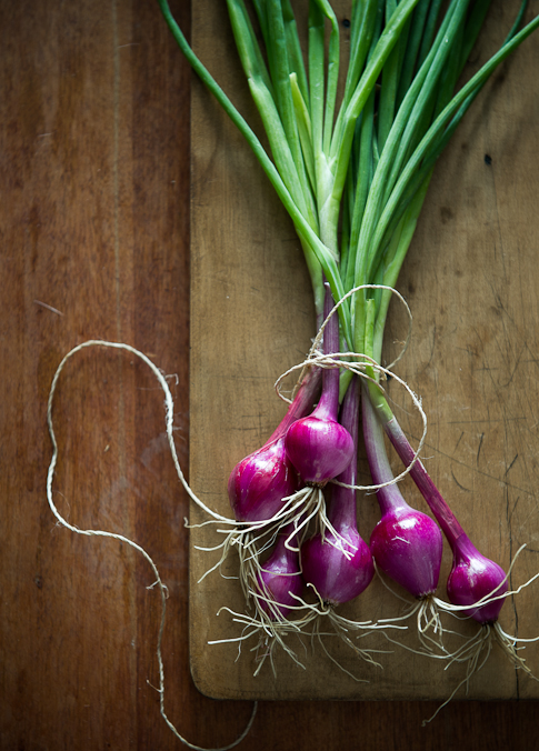 How to Grow cipolla onions @whiteonrice