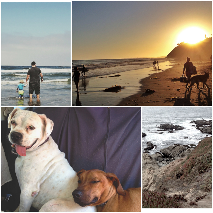 Dog Friendly Road Trip CA Coast & Leash Free Dog Beach700