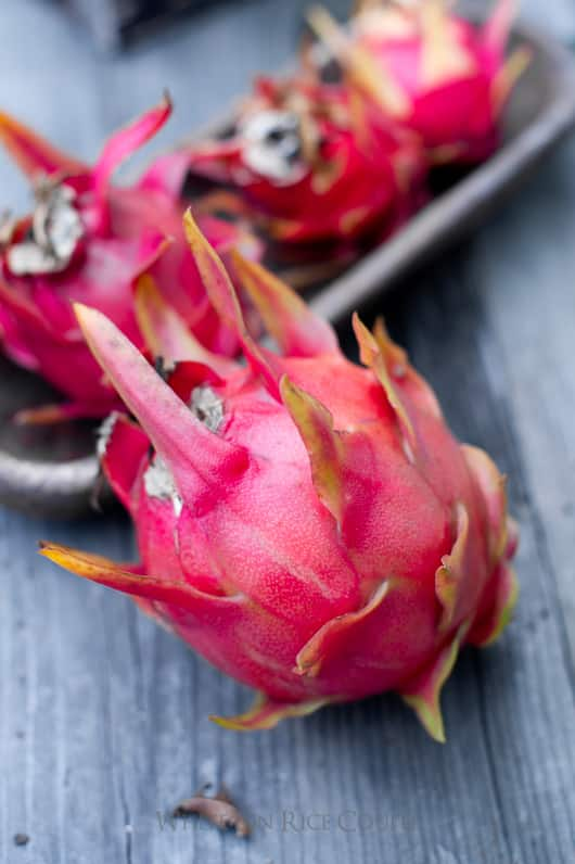 Dragon Fruit Plant and Dragon Fruit Flowers | @whiteonrice