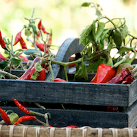 Thumbnail image for Dried Chili Peppers – Can't keep up with hot explosion