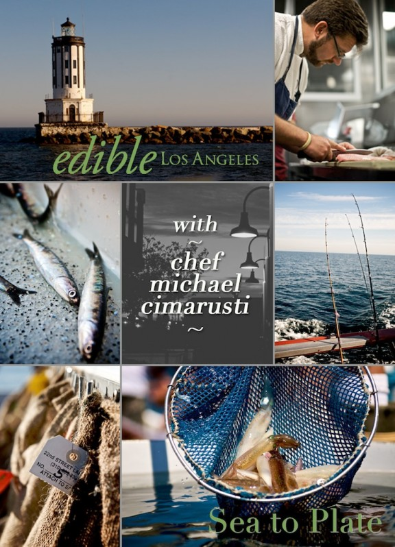 edible-sea-to-plate-collage-1