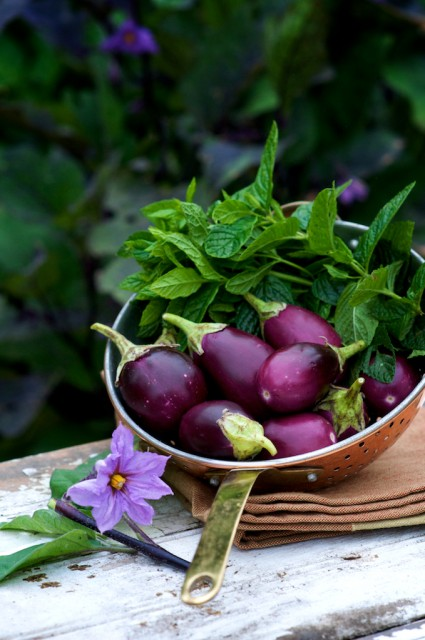 roasted eggplant recipes