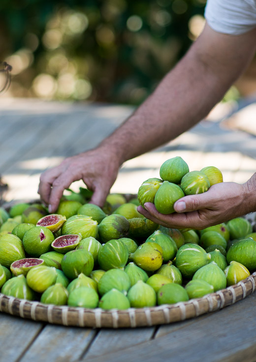 Fresh Figs from Fig Tree for Baked Fig Recipe w/Blue Cheese & Bacon  on WhiteOnRiceCouple.com