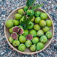 Thumbnail image for Figs off the tree