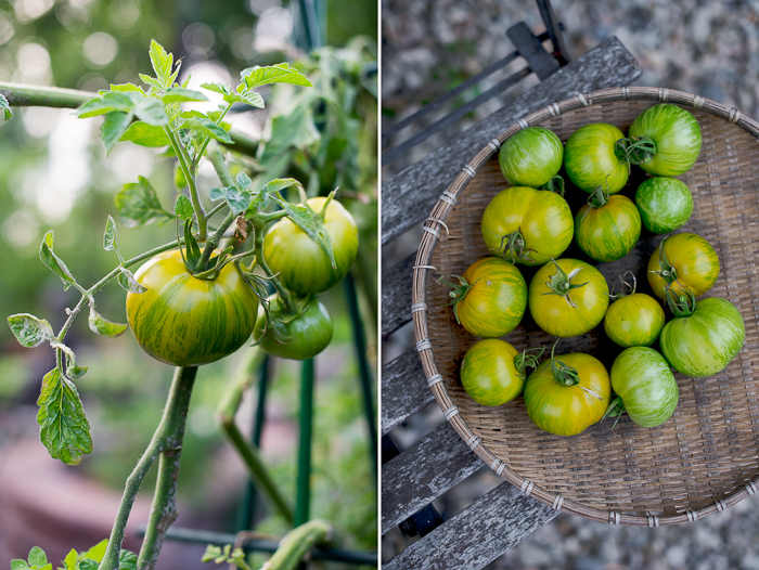 Green Zebra Tomatoes from Garden on WhiteOnRiceCouple.com