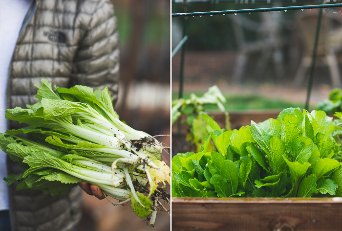 Garlicky Winter Greens and Chickpea Salad Recipe on WhiteOnRiceCouple.com
