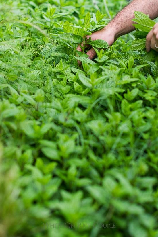 mint garden white on rice couple | @whiteonrice