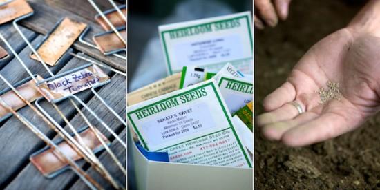 planting pea seeds