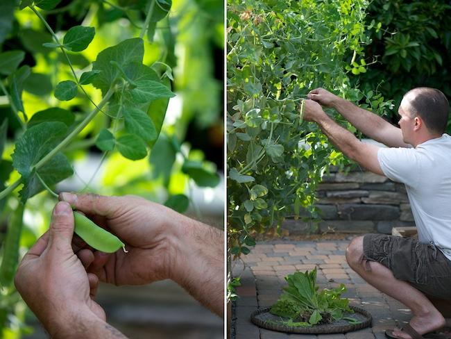 Vegetarian Peas with Mint Recipe| WhiteOnRiceCouple.com