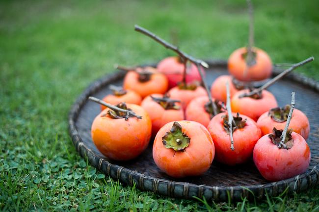 Persimmon tree photos and fruit | WhiteOnRicecouple.com