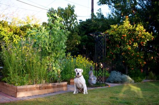 sierra in garden