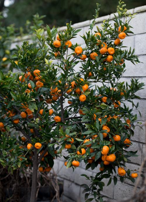 Tangerine The Peeling Of Tangerine
