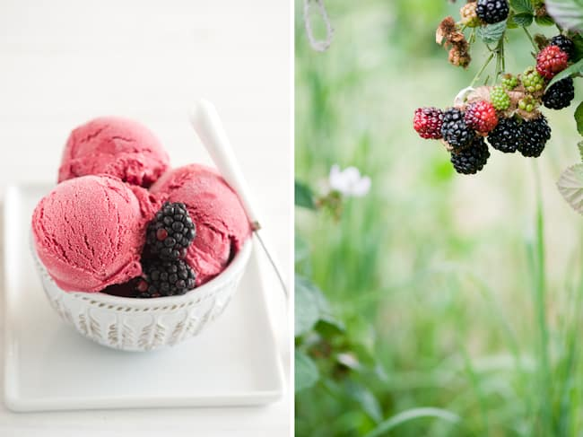 Freaking Good Home Made Blackberry Ice Cream & Stehly Organic Farms ...