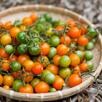 Thumbnail image for More garden tomatoes in November