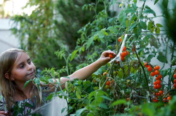 tomato-jam-recipe