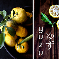 Thumbnail image for Yuzu Citrus – Japanese Citron Lemon